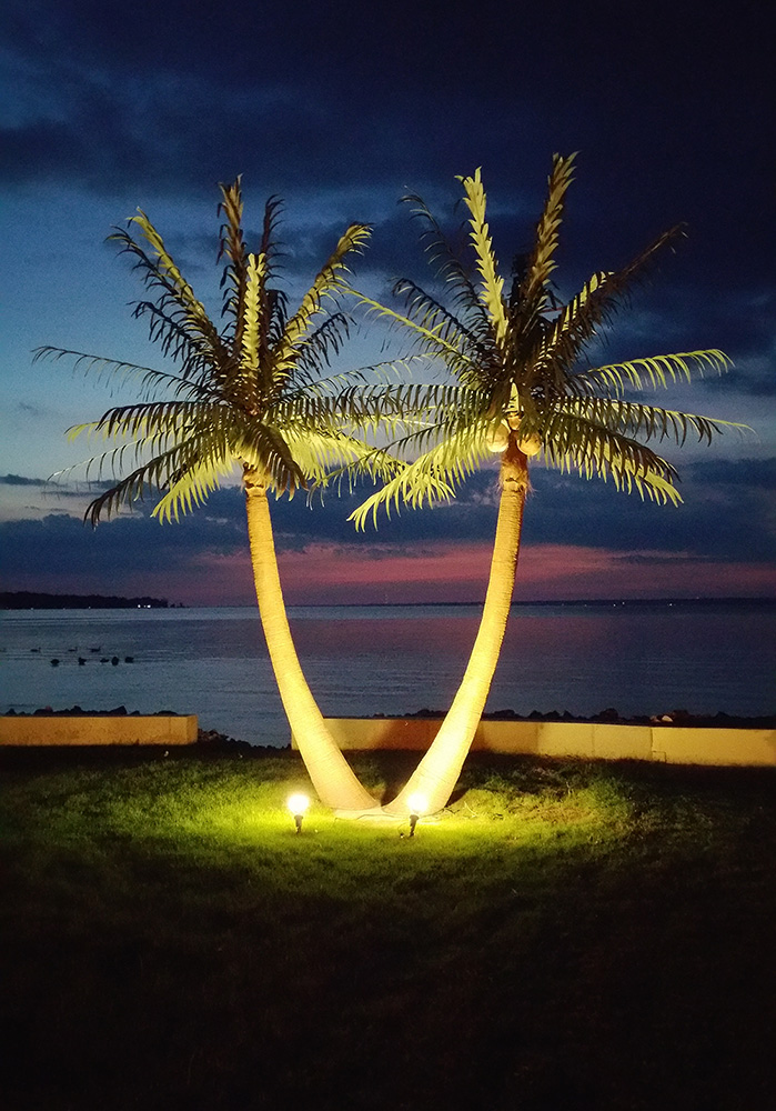 <h6>17′ Royal Windswept Palms</h6> <div>Looks great installed in pairs.<br>Light your palm trees up at night for a</div> <div>spectacular view</div>