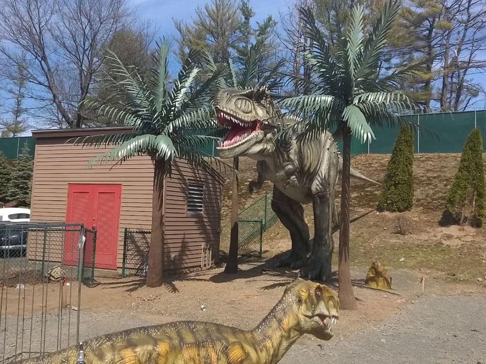 <p>Movie sets use Tropical Expressions Palm Trees for a Jurassic Park Theme<br></p>