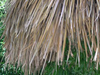 <h6>Palm Thatch Roofing</h6>