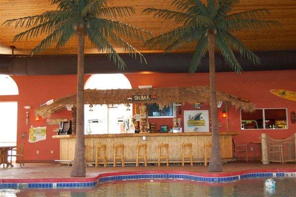 19' King Palms